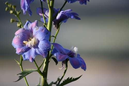Flowers Purple Garden Nature Mountains Landscape