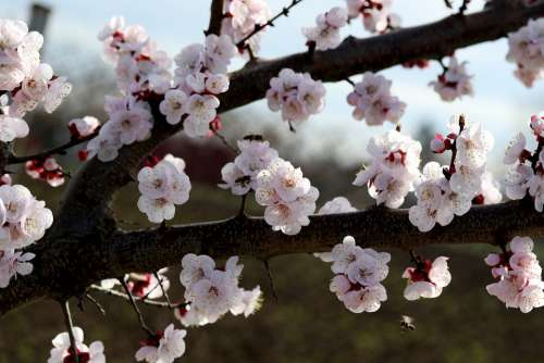 Flowers White Spring Casey Tree Nature Supplies