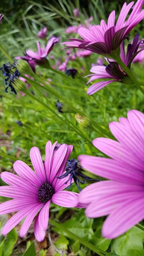 Flowers Purple Petals Lavender Nature Bloom