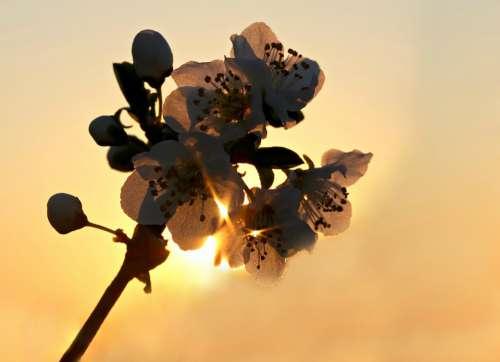 Flowers Sun Light Spring Casey Bloom