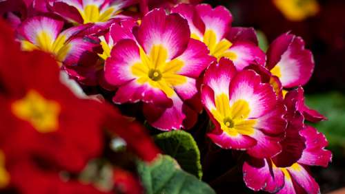 Flowers Spring Plant Garden Colorful