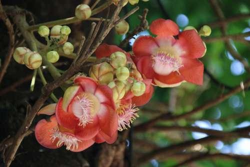 Flowers India Nature Kerala