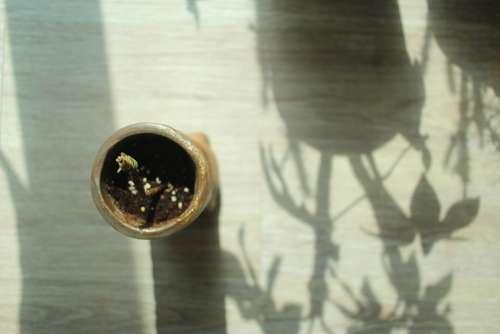 Focus Plant Leaf Green Background Natural Silent