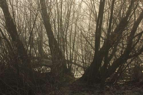 Fog Lake Sun Nature Freedom Mysticism Rest Away