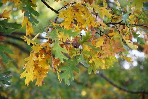 Foliage Autumn Nature Tree Yellow