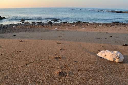 Footprints Beach Sand Path Track Stones Walking