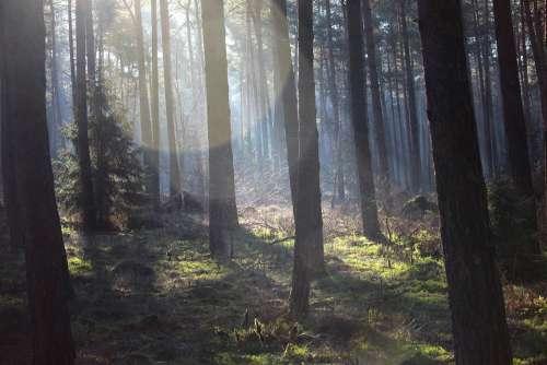 Forest Spring Green Silent Rest Live Lichtspiel