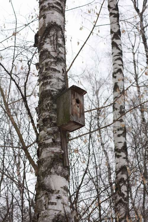 Forest Birds Nature Tree Landscape Winter Sparrow
