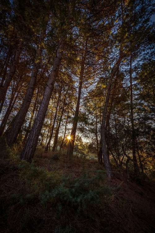 Forest Dawn Sun Landscape Tree Nature Trees Sky