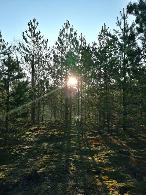 Forest Sun Morning Spring Sunrise Nature Sky