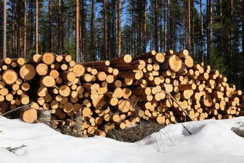 Forest The Forest Industry Pine Lumber Log Logging