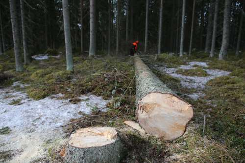 Forest Tree Logs Six Collection Log Logger