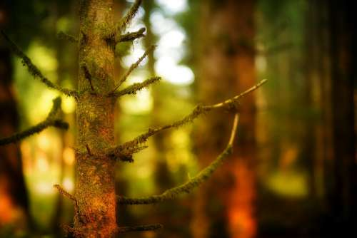 Forest Tree Close Up Bokeh Blur Nature Autumn