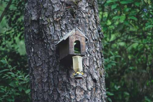 Forests House Of Birds Birdhouse Wood Tree Nidal