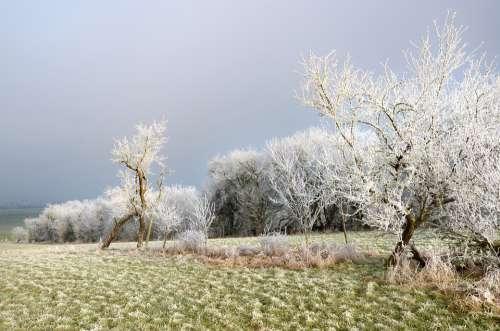 Frost Field Mirabelier Fog Sun Nature Winter