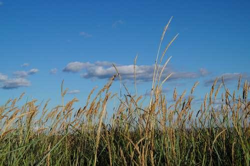 Grasses Beach Nature Baltic Sea Sky