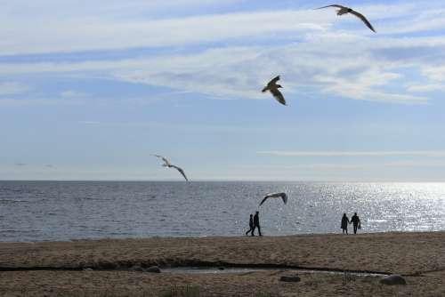 Gulls Sea Seagull Beach