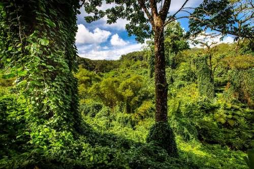Hawaii Palm Trees Foliage Tropical Nature Palm