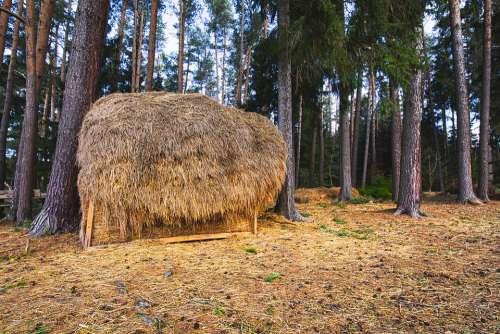 Haystacks Forest Food Parklandschaft