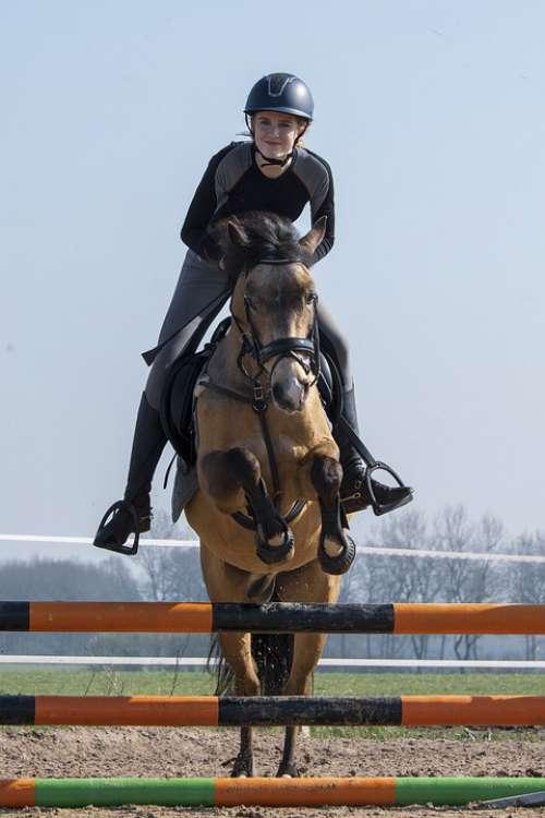 Horseback Riding Horse Equestrian Horses Nature