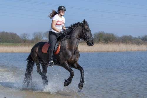 Horseback Riding Horse Nature Equestrian Outdoor