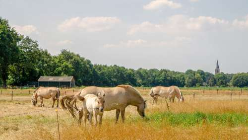 Horses Summer Hot Nature Countryside Area
