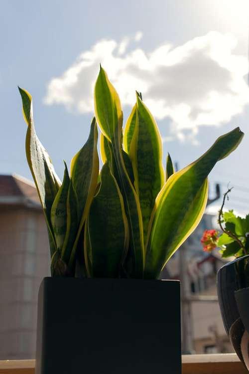 House Plant Flower Pot Sky Light Cloud