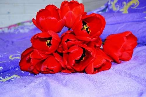 Природа Лето Сад Лепестки Flower Bloom Plant