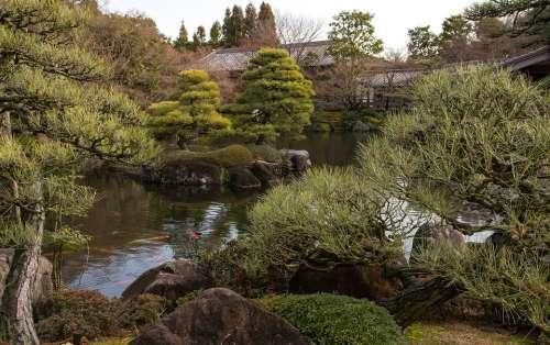 Japan Himeji Garden Lake Pine