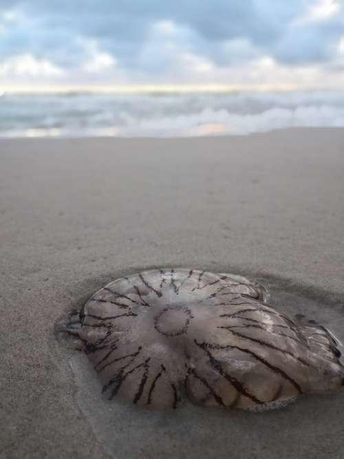 Jellyfish Sand Sky North Sea Sea Ocean