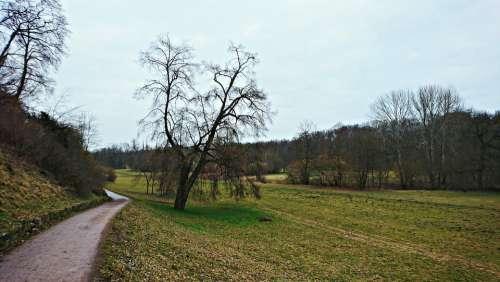 Landscape Tree Trail Manicuring