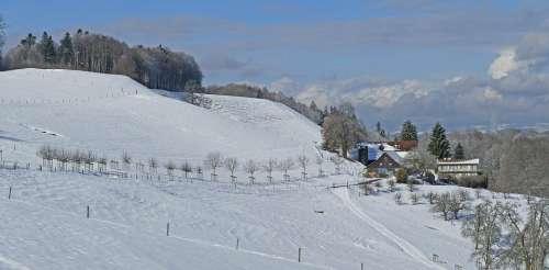Landscape Switzerland Winter Sun Clouds Trees