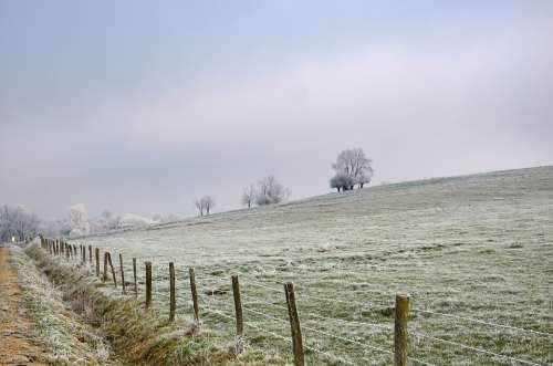 Landscape Frost Winter Cold Nature Fog Trees