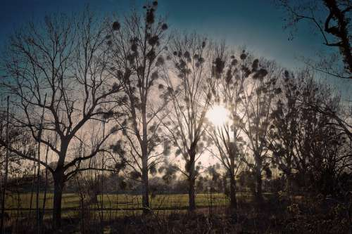 Landscape Trees Nature Scenic Sky Light Sunlight