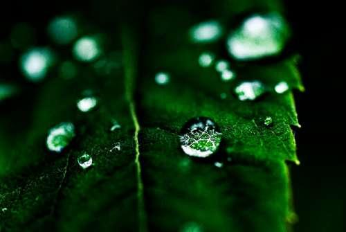 Leaf Drop Green Macro Nature Leaves Plants Water