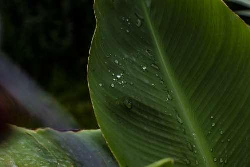 Leaf Plant Natural Grass