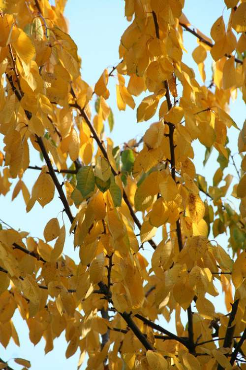 Leaves Autumn Tree Trees Forest Nature Colorful