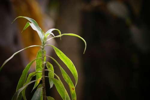 Leaves Random Nature Creative Plant Garden
