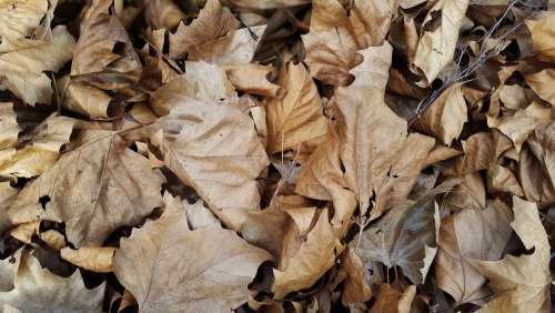 Leaves Autumn Forest Fall Nature Tree Leaf Mood