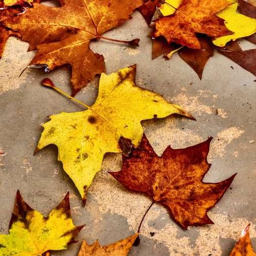 Leaves Fallen Dead Autumn Foliage Yellow Brown