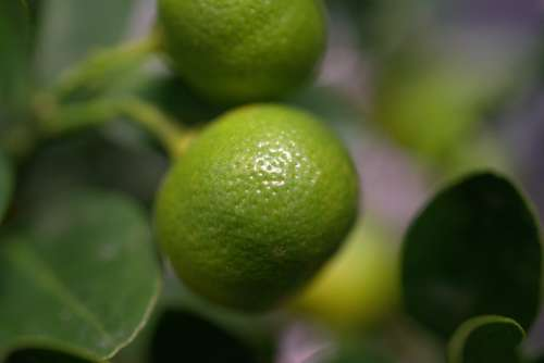 Lemon Citrus Fruit Fresh Fruit Healthy Sour Juice