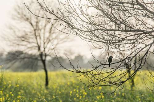 Lonely Bird Bird Nature Sad Sparrow Branch