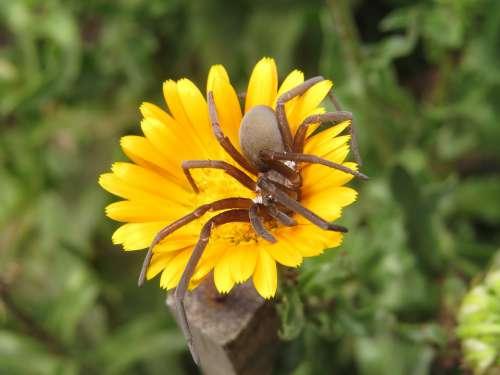 Macro Insect Arachnid Armenia