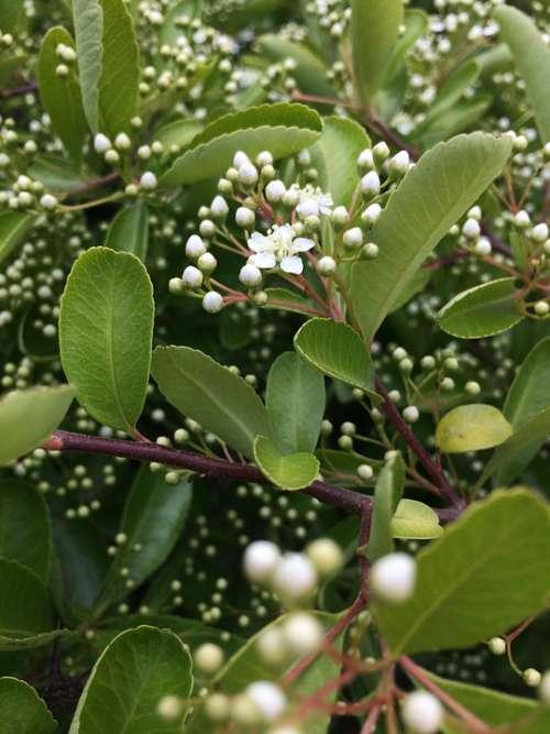 Macro White Flower Nature Plant Flora Spring