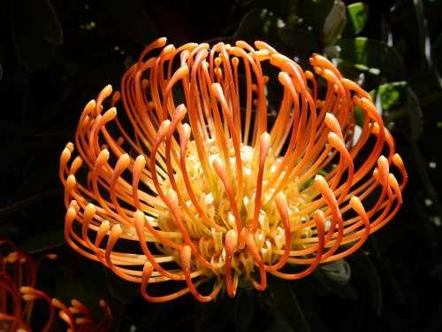 Madeira Flower Nature Plant Portugal Blossom