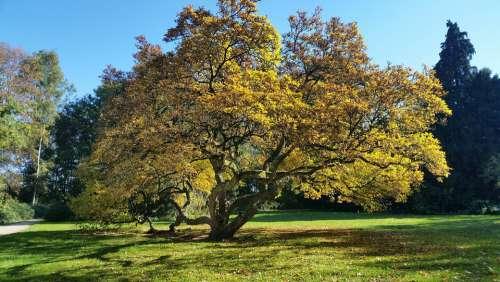 Magnolia Tree Light Shadow Nature Plant Beauty