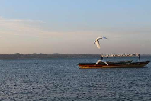 Mar Paige Seagull Water Flight Sky Freedom Beach