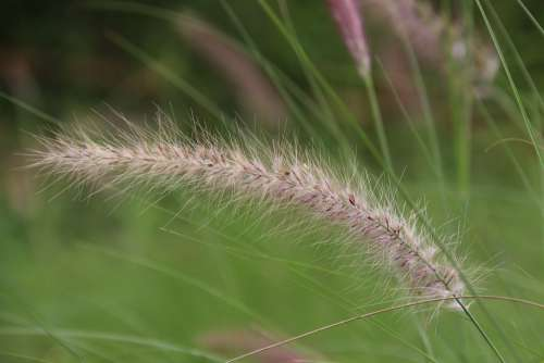 Miscanthus Wilderness Riverside Grass
