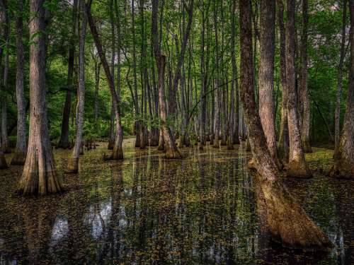 Mississippi America Swamp Forest Trees Woods