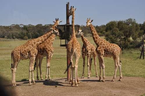 Monarto Zoo Zoo Outdoor Zoo Nature Wildlife